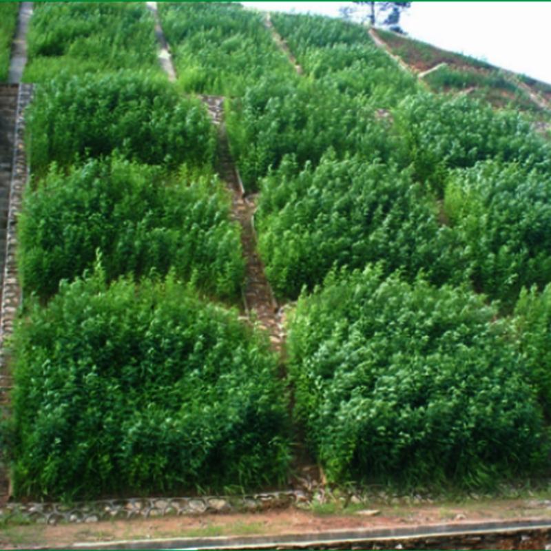 广东梅河高速(2004.04~2005.10)