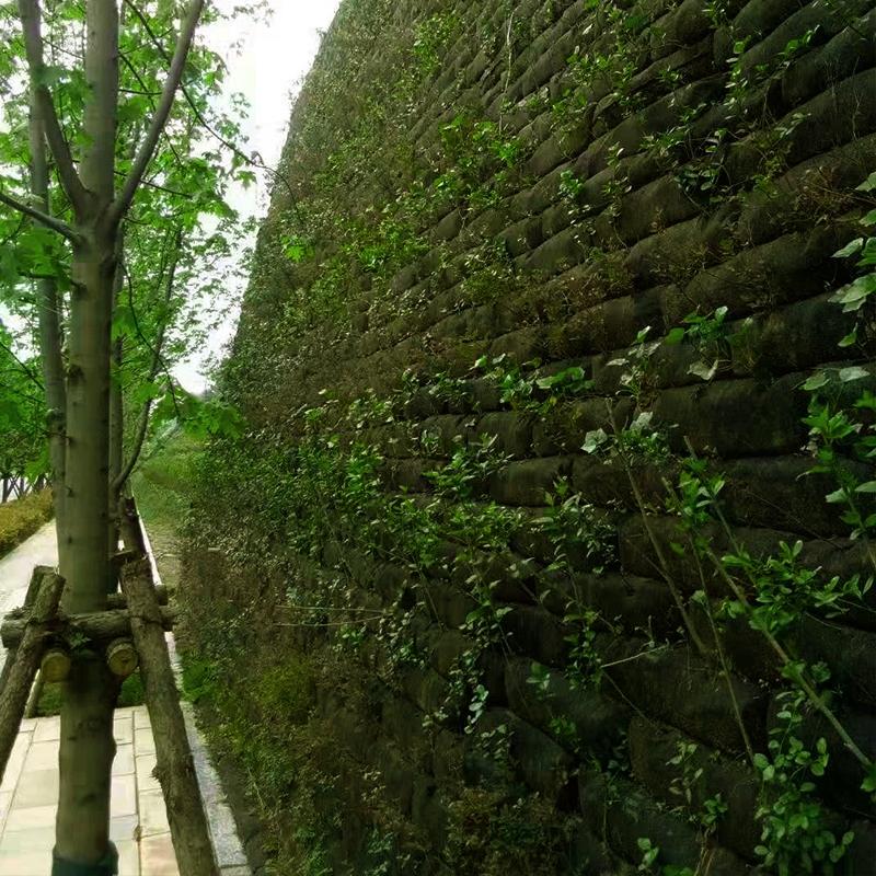 贵州省贵阳市花溪区华冠路3标绿化覆绿半年后