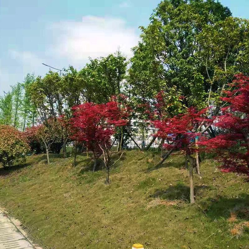贵州省安新区高峰山大道景观万博体育app平台效果