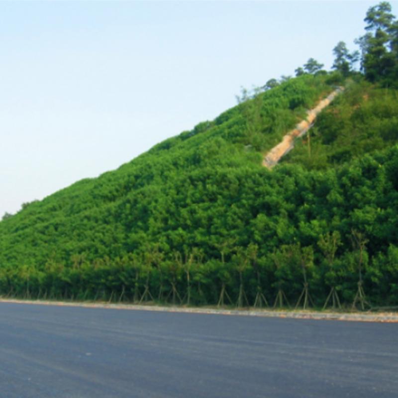 广东粤赣高速(2004.11~2005.12)