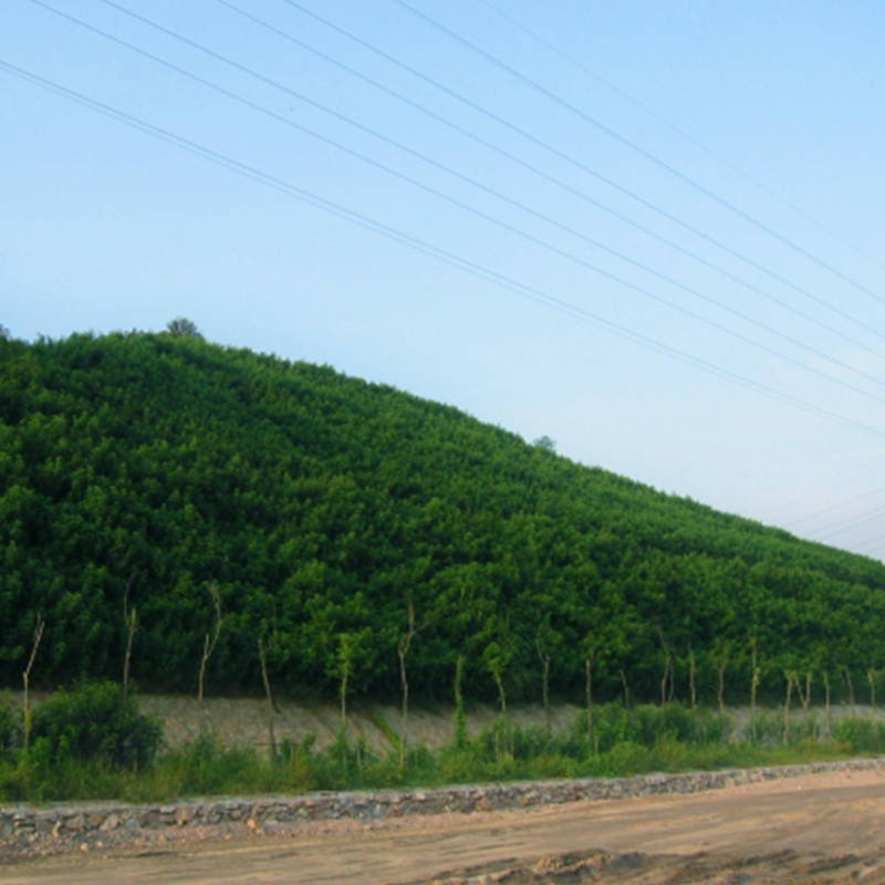 广州西二环环城高速(2006.03~2006.10)