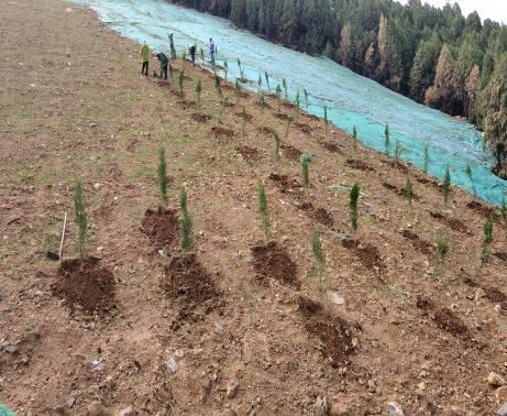 治理Ⅱ区 苗木种植